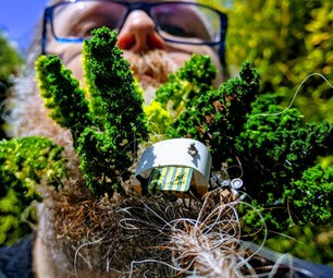 How to Make a Beard Forest