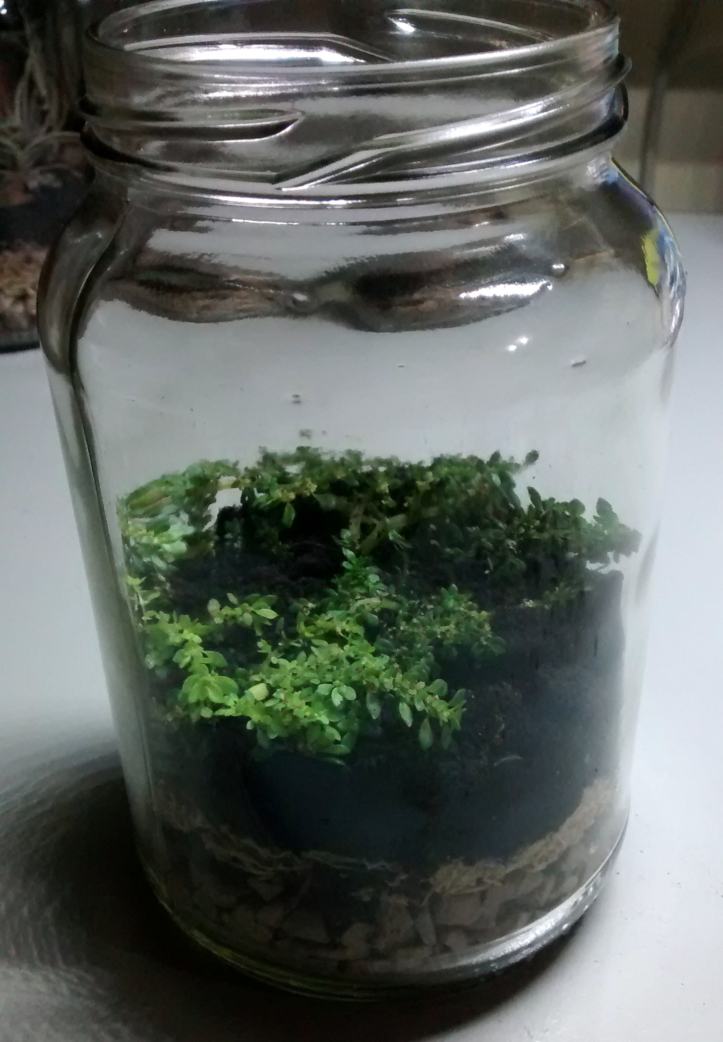 Picture of Fourth Type Plant Pot  - Moss