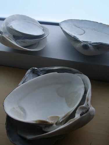 Picture of Prepare Shells
