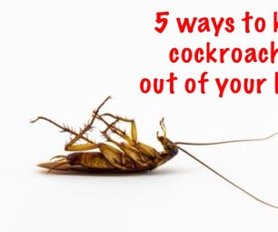 5 Ways to Keep Cockroaches Off Your House