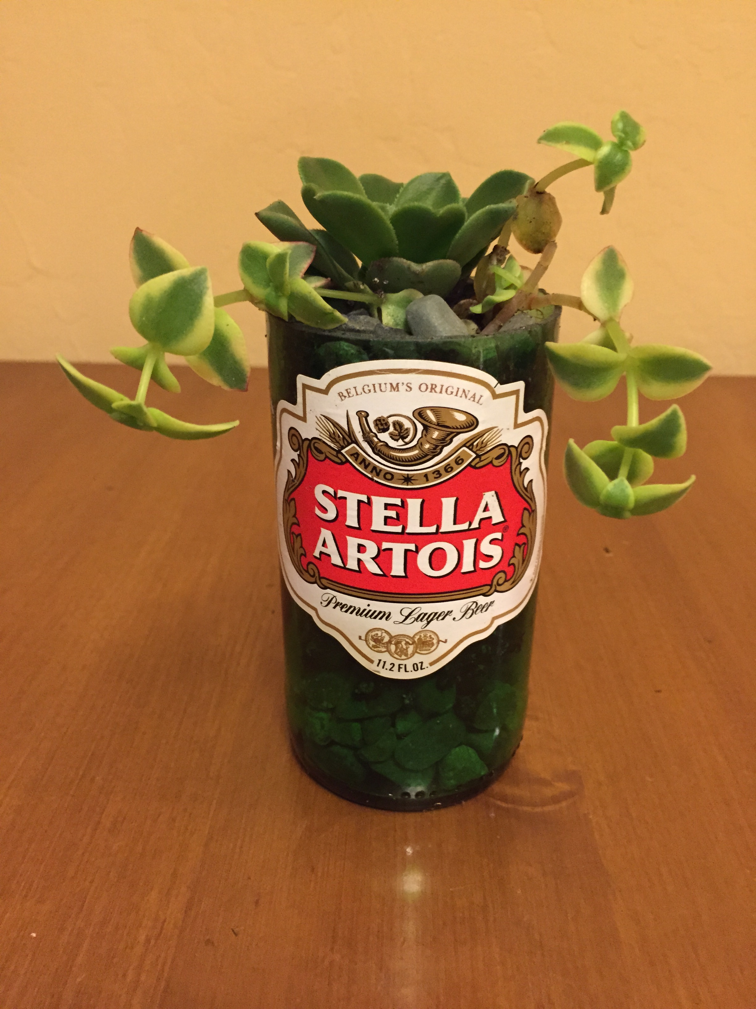 Picture of Beer Bottle Succulents
