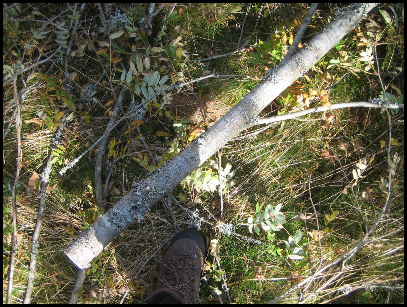 Picture of The Pole