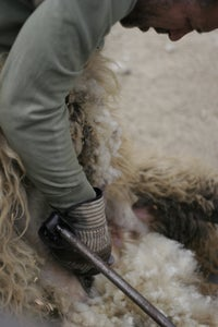 Wash Wool or Other Fibers for Spinning.