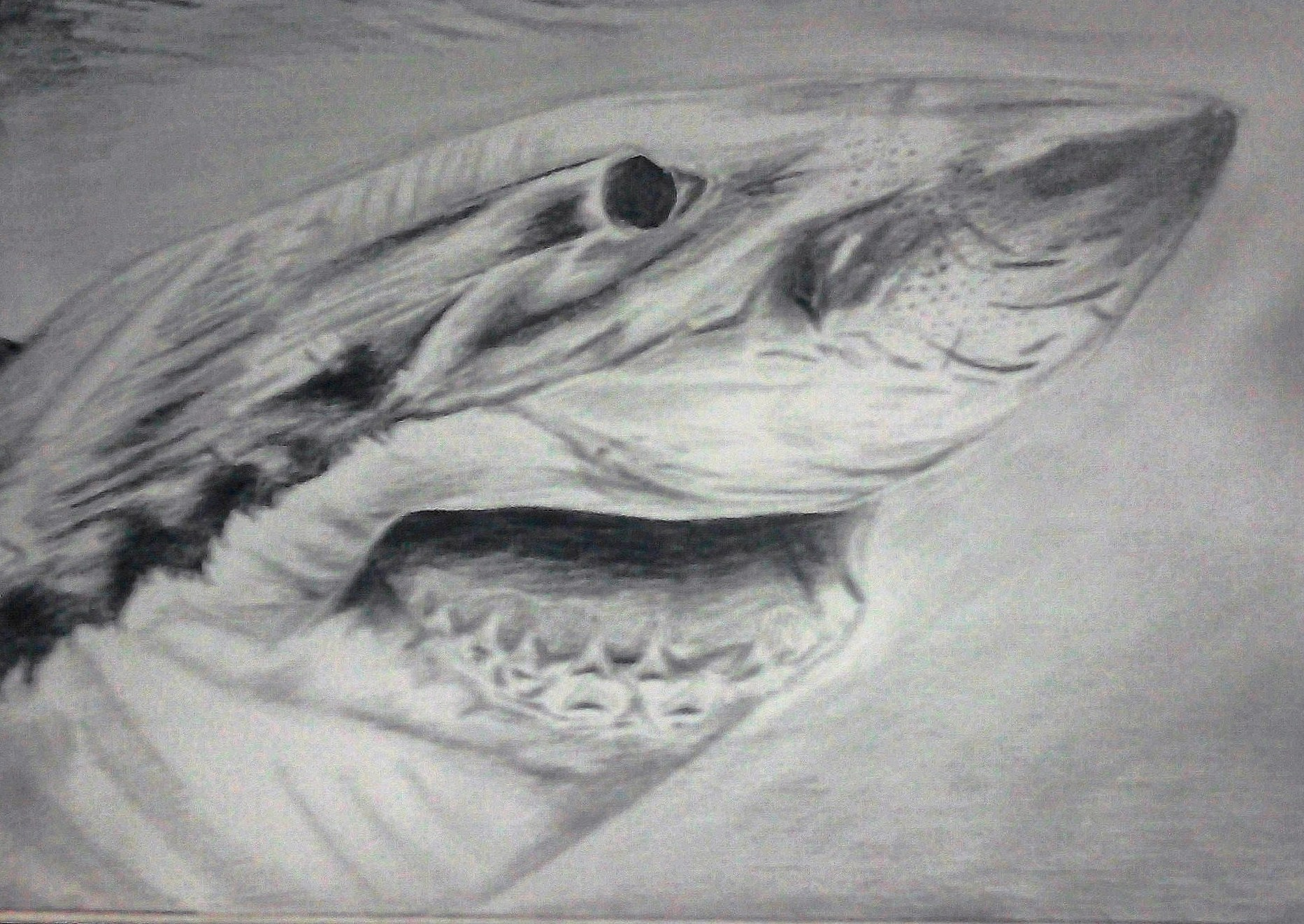 Picture of Meh Art Work