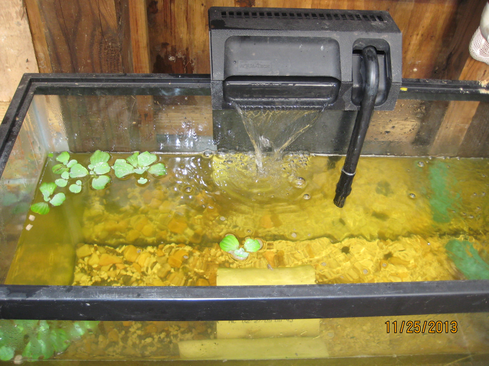 Picture of Fish Tanks Are Hard to Clean. What Would You Do to Get It to Clean Itself.
