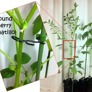 DIY Hydroponic Growing Bottle