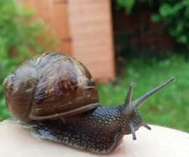 Snail Care And House