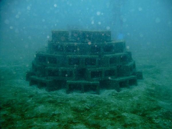 Build an Artificial Reef