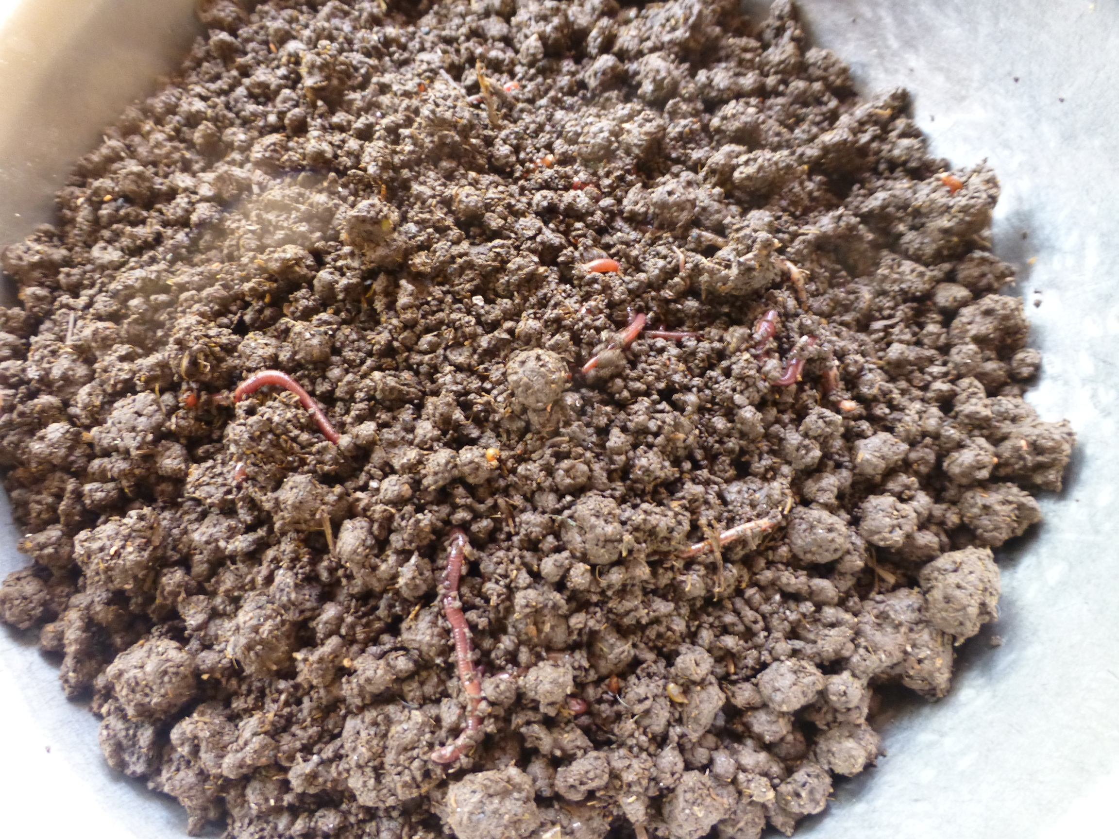 Picture of Vermicomposting the Easy Way for the Urban Farmer