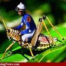 Grasshopper1221