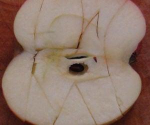 Apple Jigsaw Puzzle #7 With Bonus!