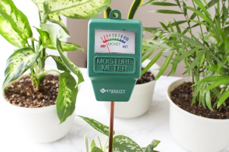 Checking When to Water Plants With a Moisture Meter