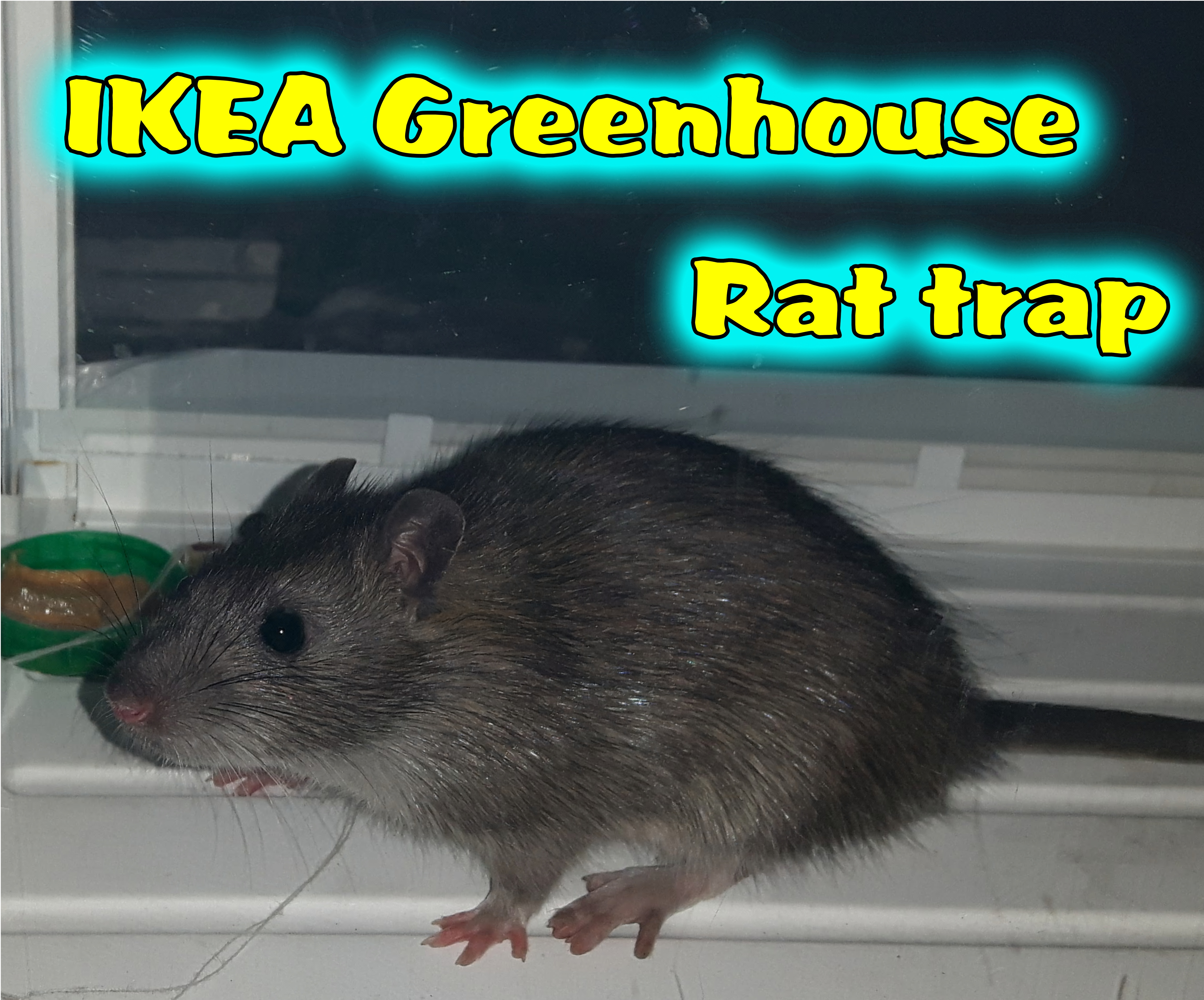 Picture of IKEA Greenhouse Rat Trap