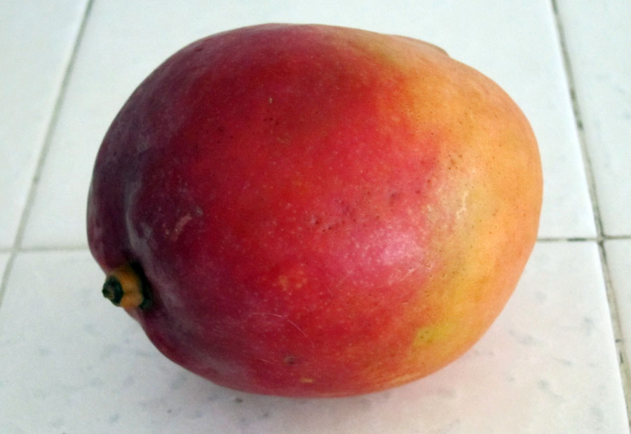 Picture of Gardening From the Grocery Store - MANGOS