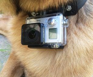 GoPro Dog Collar
