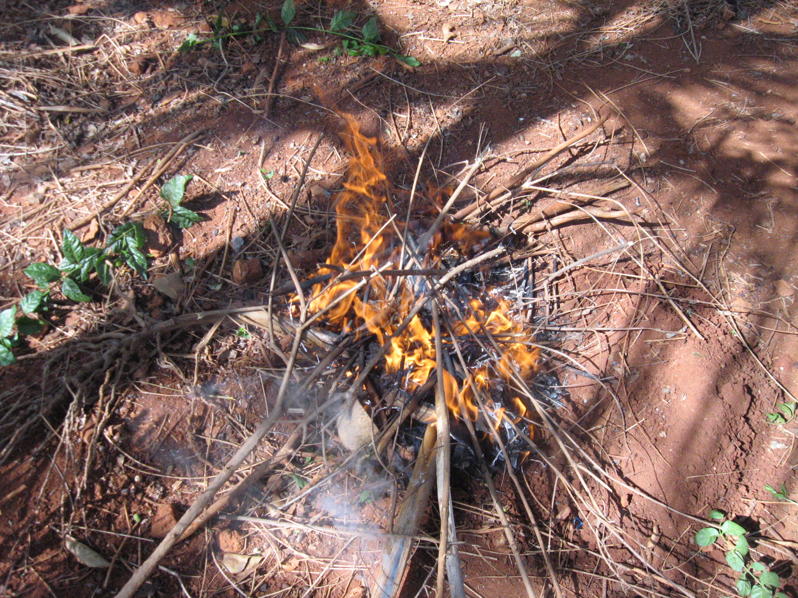 Picture of Place Coconut With Stick in Fire