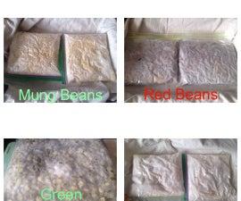 Fermenting Beans - DIY Tempeh