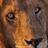 lionlover24