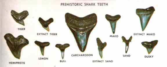 Picture of Exploring the Science Behind the Teeth!