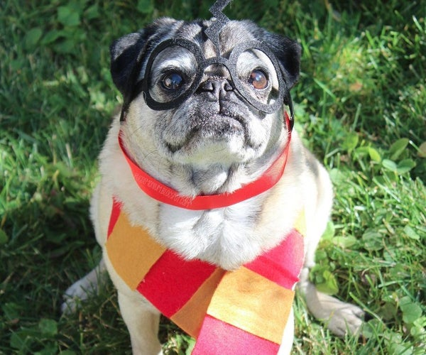 Harry Pawter Pet Costume