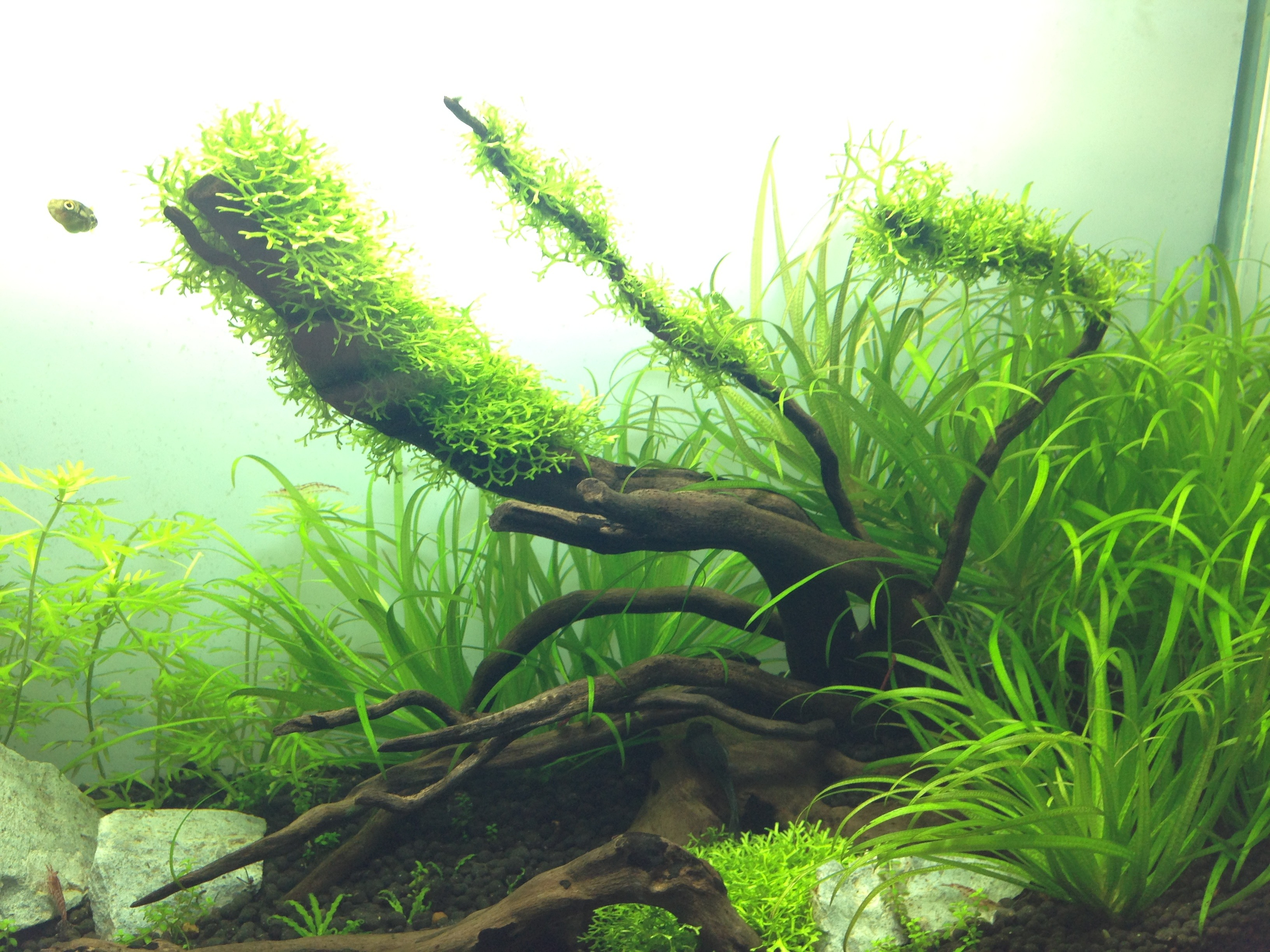 Picture of Placing Into the Tank