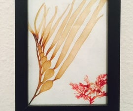 Sea Flora Art: Easy Algae Herbarium Specimens!