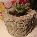 Concrete Pineapple Pot for Succulent