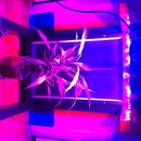 108W LED Grow Light Panel