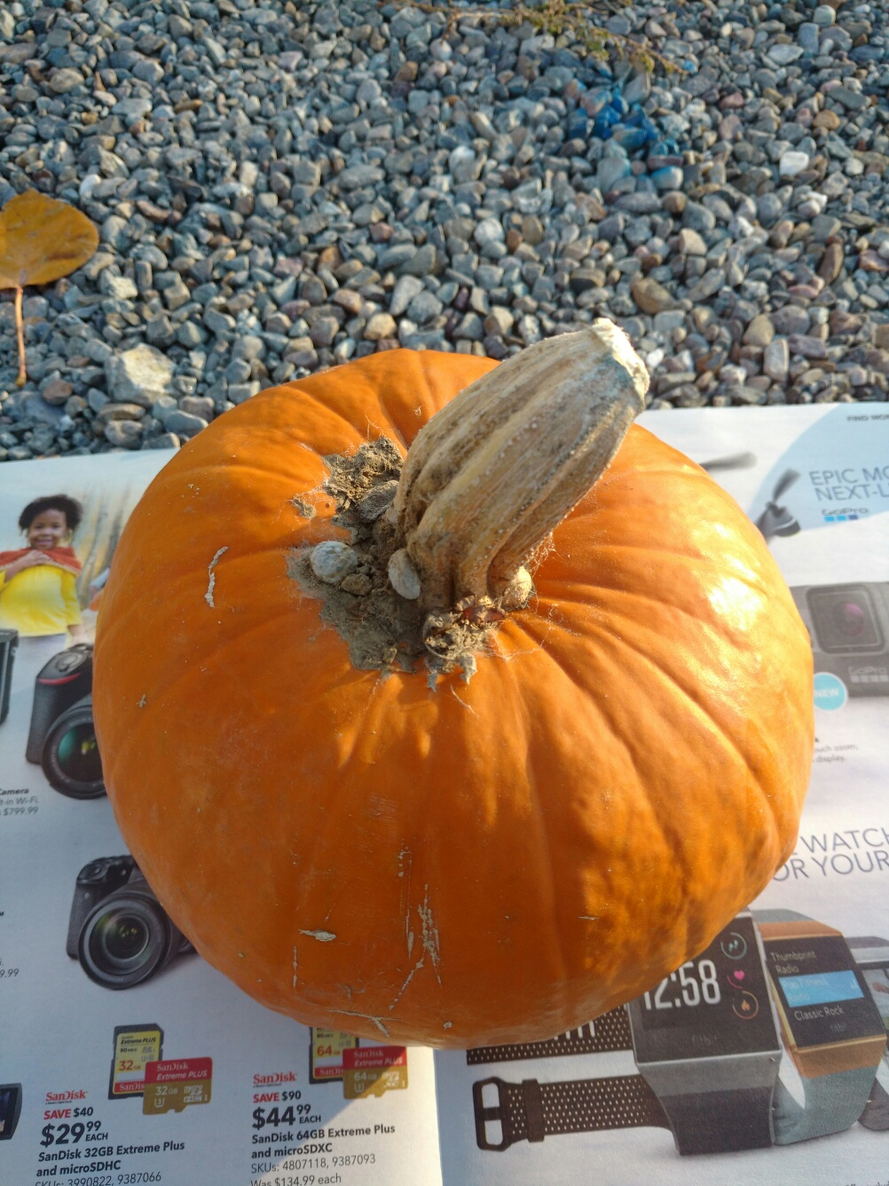 Picture of Step 1: Get a Pumpkin.