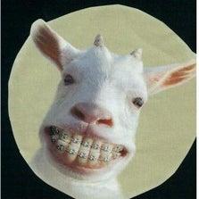 Goaty_smile_small.jpg