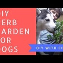 Indoor Pet Herb Garden for Dogs or Cats