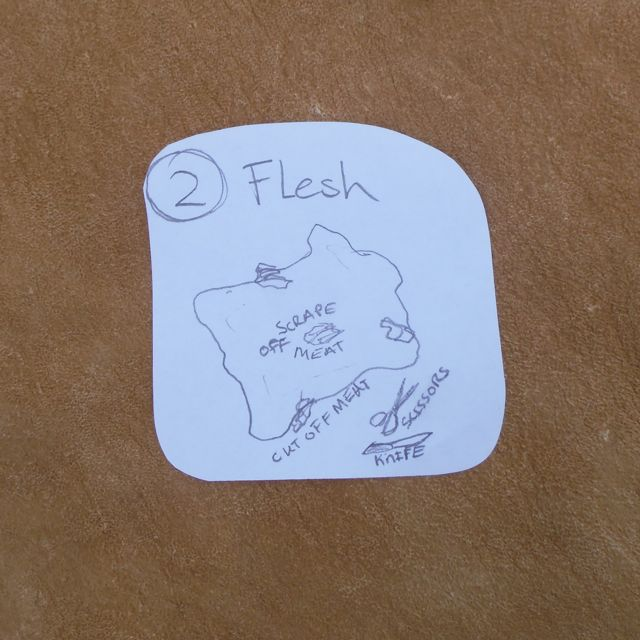 Picture of Fleshing