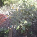 Suet cage from scrap mesh and wire.