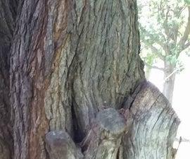 Old Tree Geocache