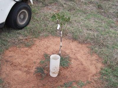 Watering Each Tree