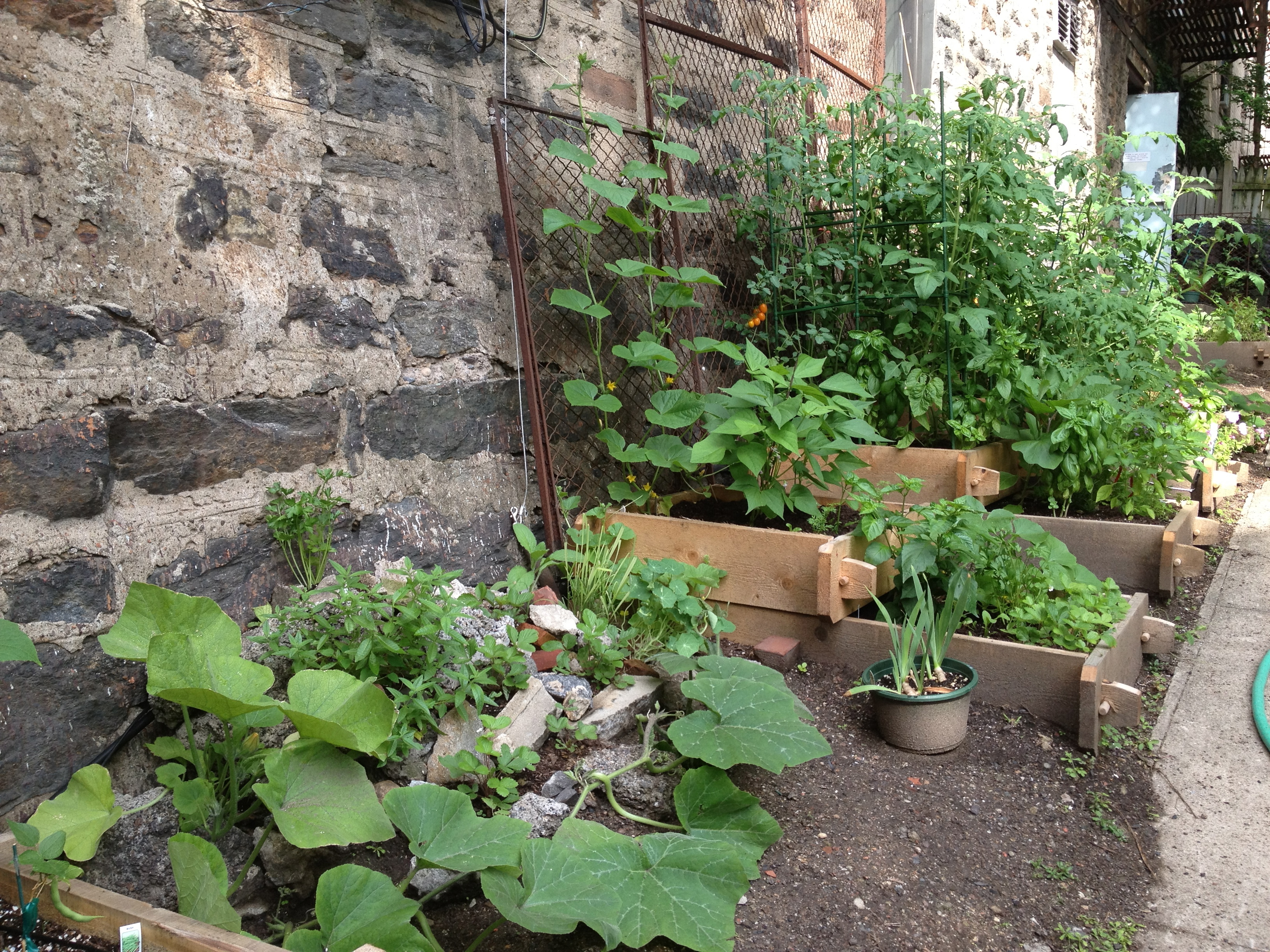 Picture of Things We've Grown and Found in the Garden