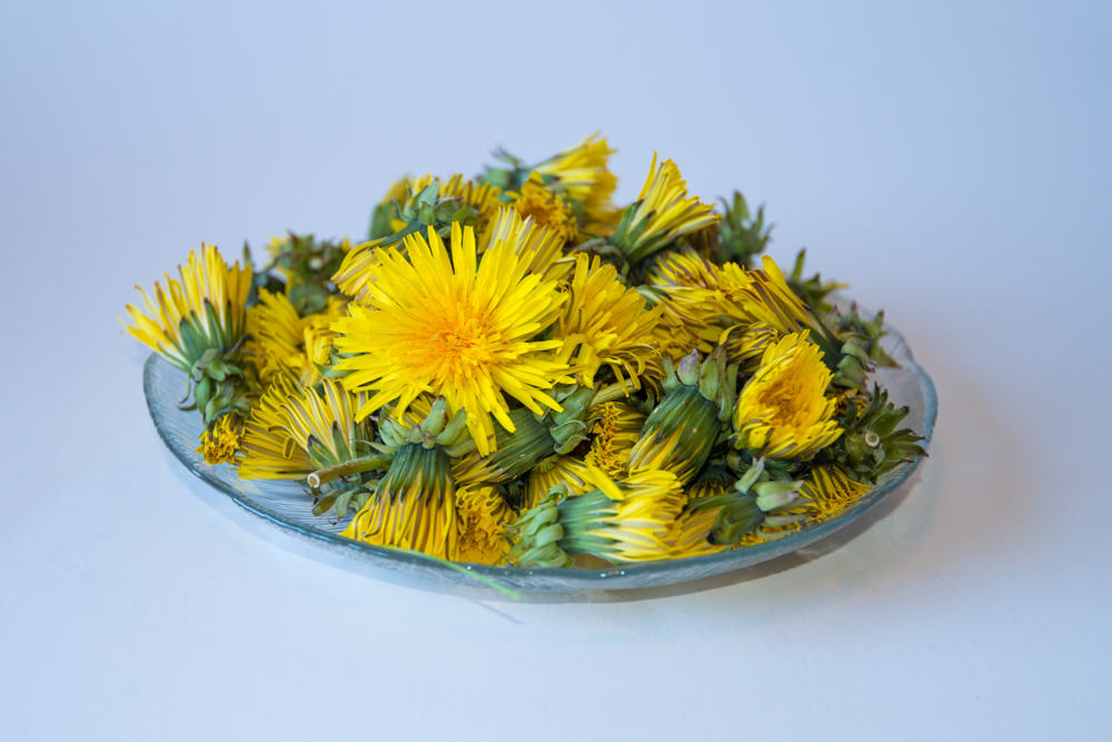 Picture of Dandelion Yellow