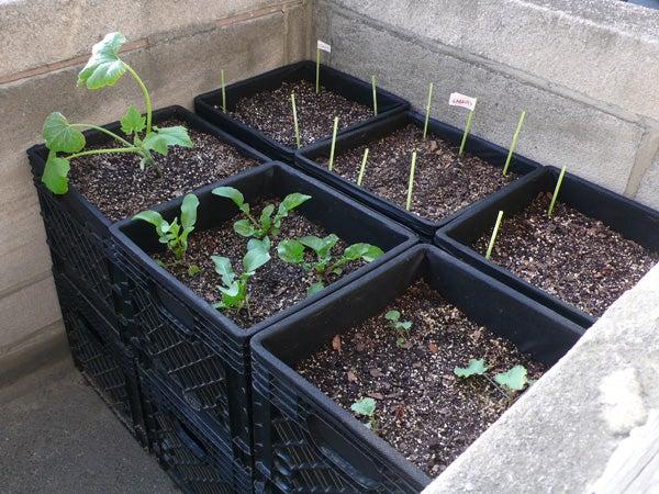 "Milk Crate ""Air-Pot"" Urban Container Gardening"