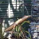 Copper Deer Scarer (Shishi Odoshi) for an urban garden