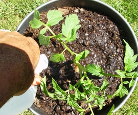 How to Build a Simple and Basic Double Tomato Container with Water Resevoir