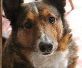 How to Take Amazing Dog Photos
