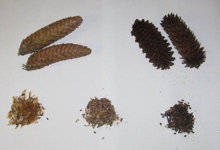 Processing Soft Scale Cones