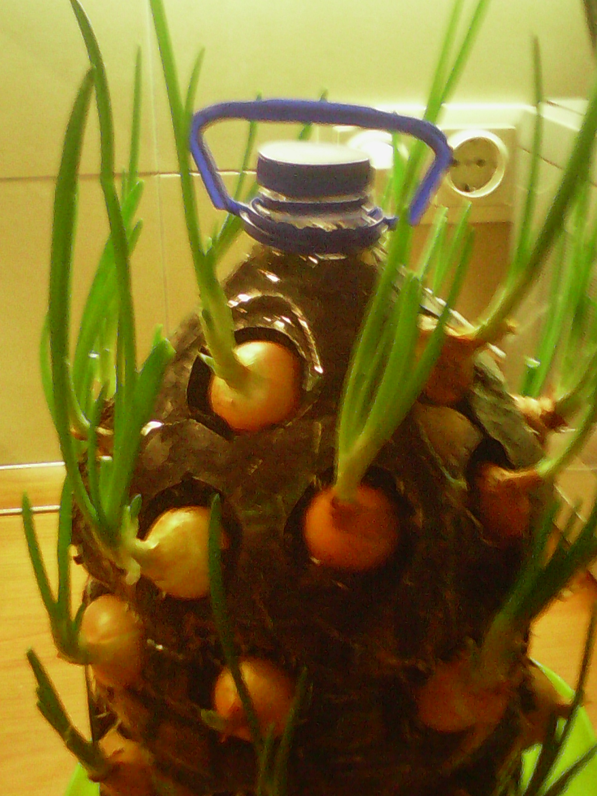 Picture of And Now Water Onions, But Slow