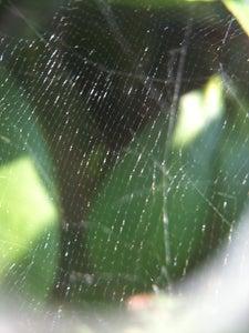 Find Abandoned Webs