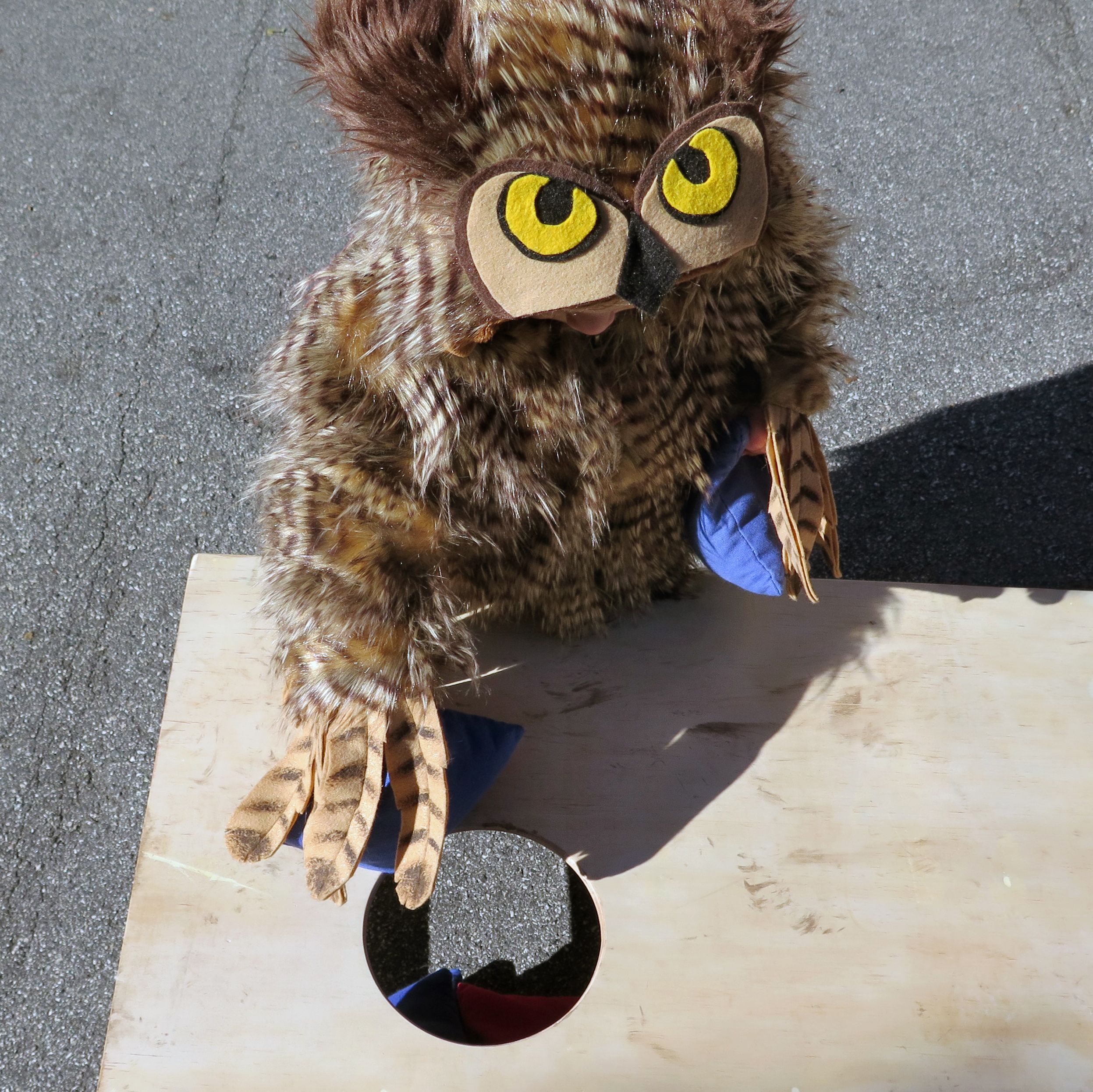 Picture of Make an Owl Costume