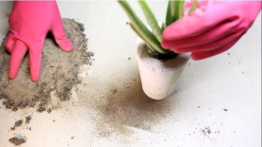 ADD:- SOIL + PLANT
