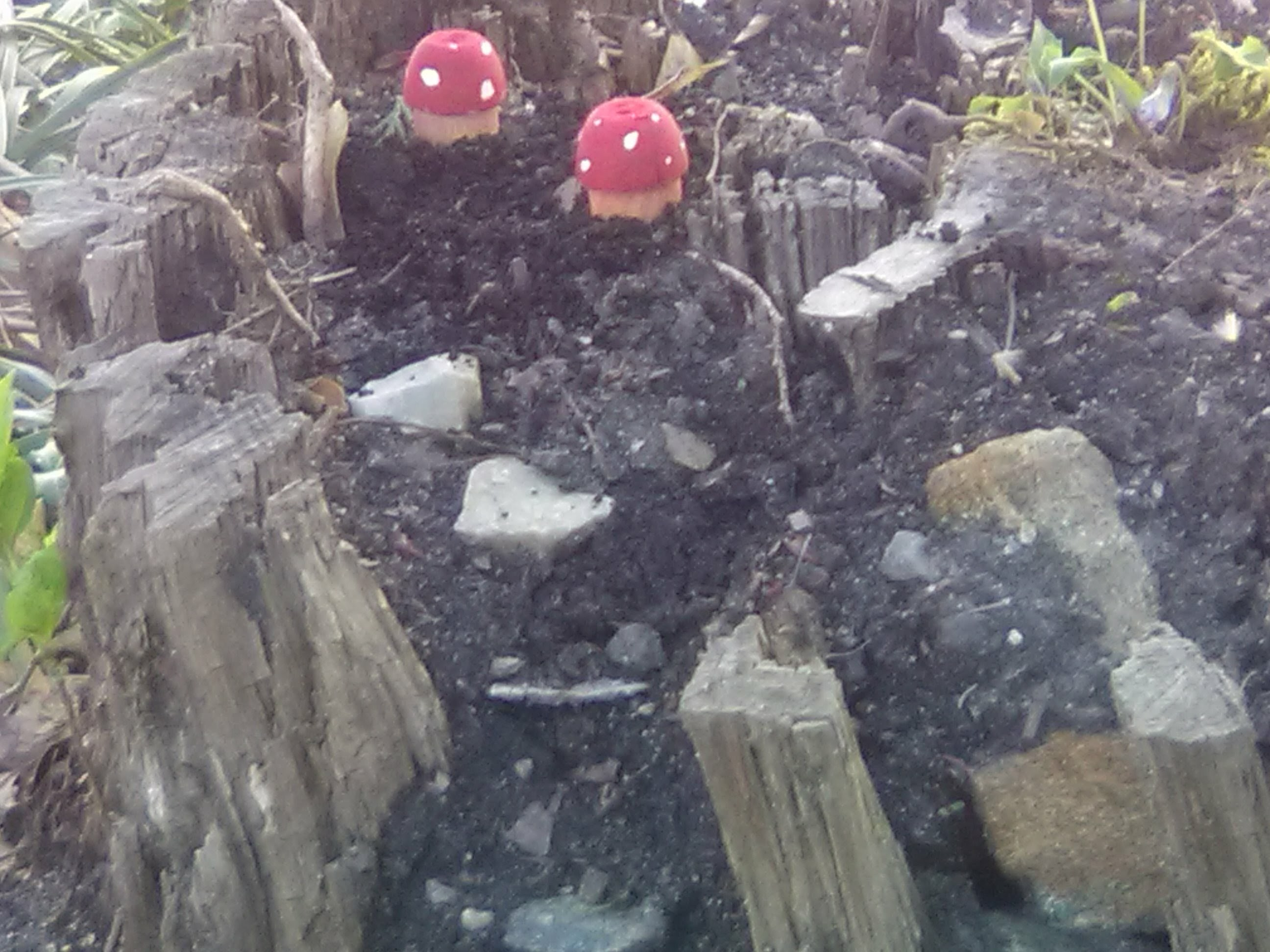 Picture of Wooden Fairy Garden Mushroom