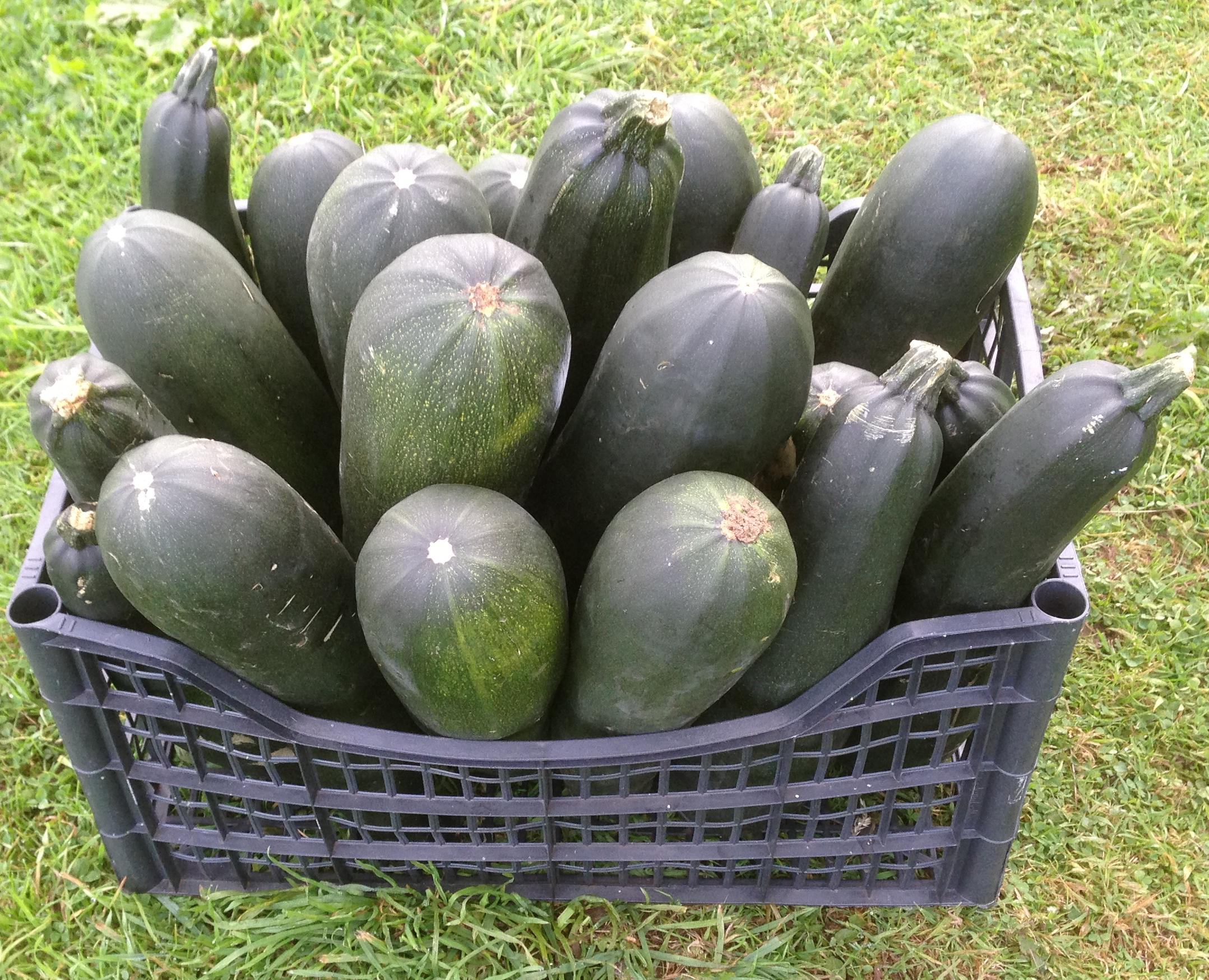 Picture of Marrow Beer From Homegrown Ingredients
