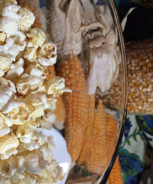 Grow and Harvest Your Own Popcorn in 15 Fun Steps