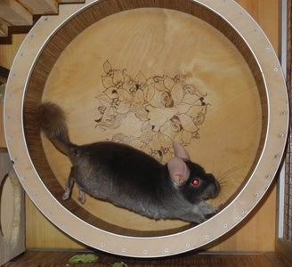 Chinchilla Exercise Wheel
